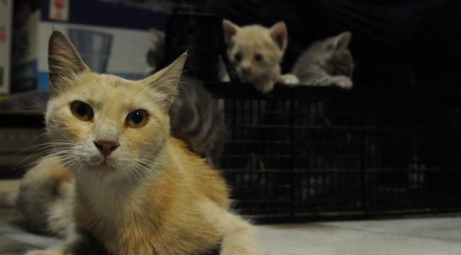 Dükkanında doğan yavru kedilere sahip çıktı