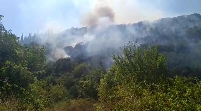 Gölcük'te orman yangını