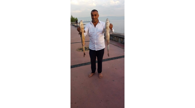 Yakaladığı 2 köpek balığıyla hatıra fotoğrafı çekip, denize saldı